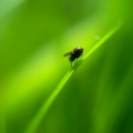 Nature - Fly